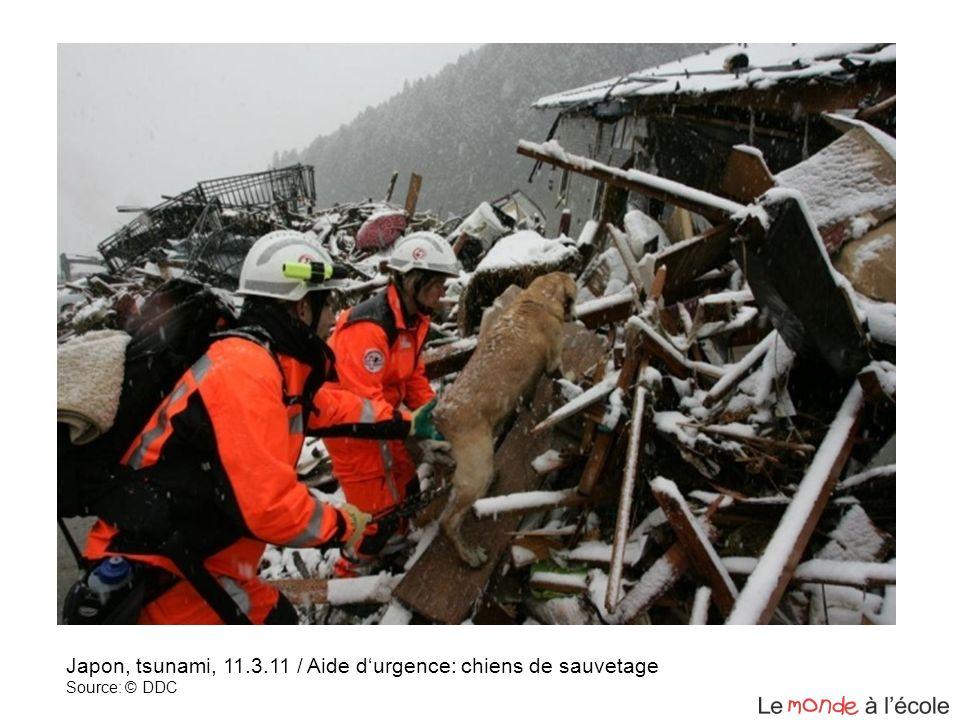 Japon, tsunami, 11.3.11 / Aide durgence: chiens de sauvetage Source: © DDC