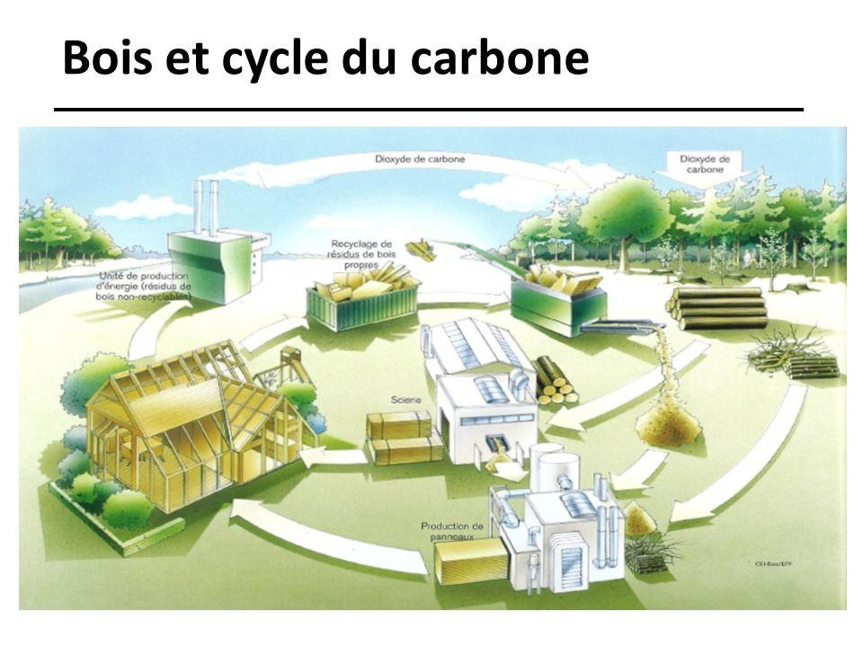Bois et cycle du carbone