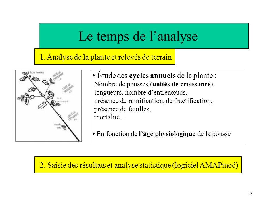 3 Le temps de lanalyse Étude des cycles annuels de la plante : Nombre de pousses (unités de croissance), longueurs, nombre dentrenœuds, présence de ra