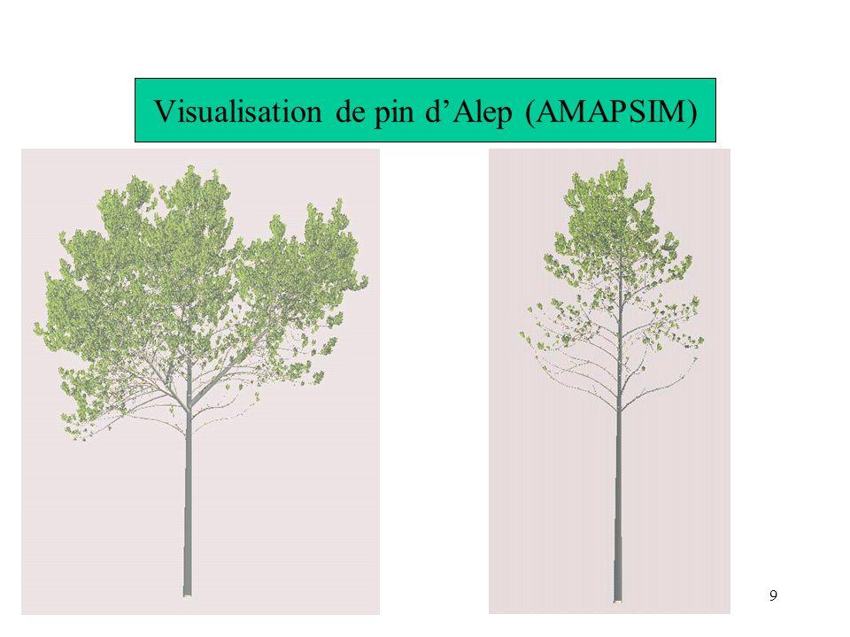 9 Visualisation de pin dAlep (AMAPSIM)