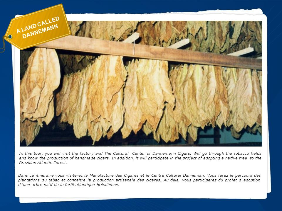 A LAND CALLED DANNEMANN In this tour, you will visit the factory and The Cultural Center of Dannemann Cigars.