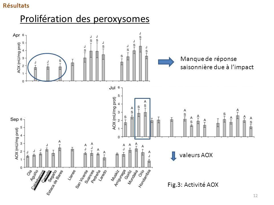 Prolifération des peroxysomes Fig.3: Activité AOX Manque de réponse saisonnière due à limpact valeurs AOX Résultats 12