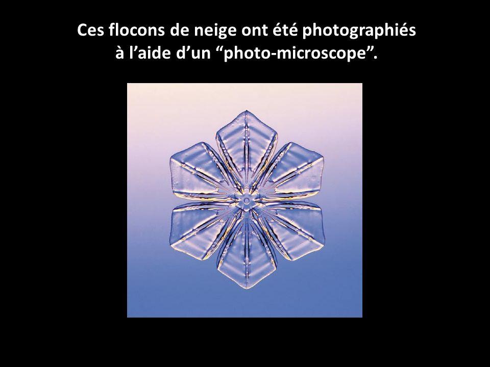 Ces flocons de neige ont été photographiés à laide dun photo-microscope.