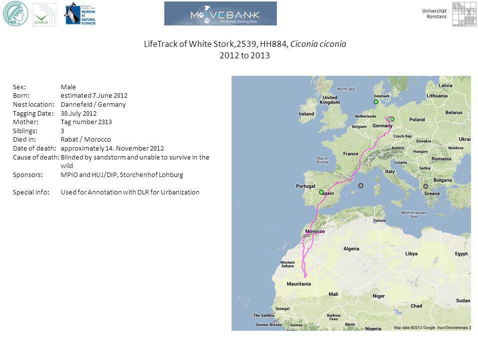 LifeTrack of White Stork,2539, HH884, Ciconia ciconia 2012 to 2013 Sex: Male Born: estimated 7.June 2012 Nest location: Dannefeld / Germany Tagging Da