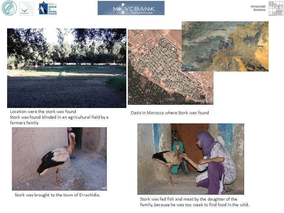 Location were the stork was found Stork was found blinded in an agricultural field by a farmers family Oasis in Morocco where Stork was found Stork was brought to the town of Errachidia.