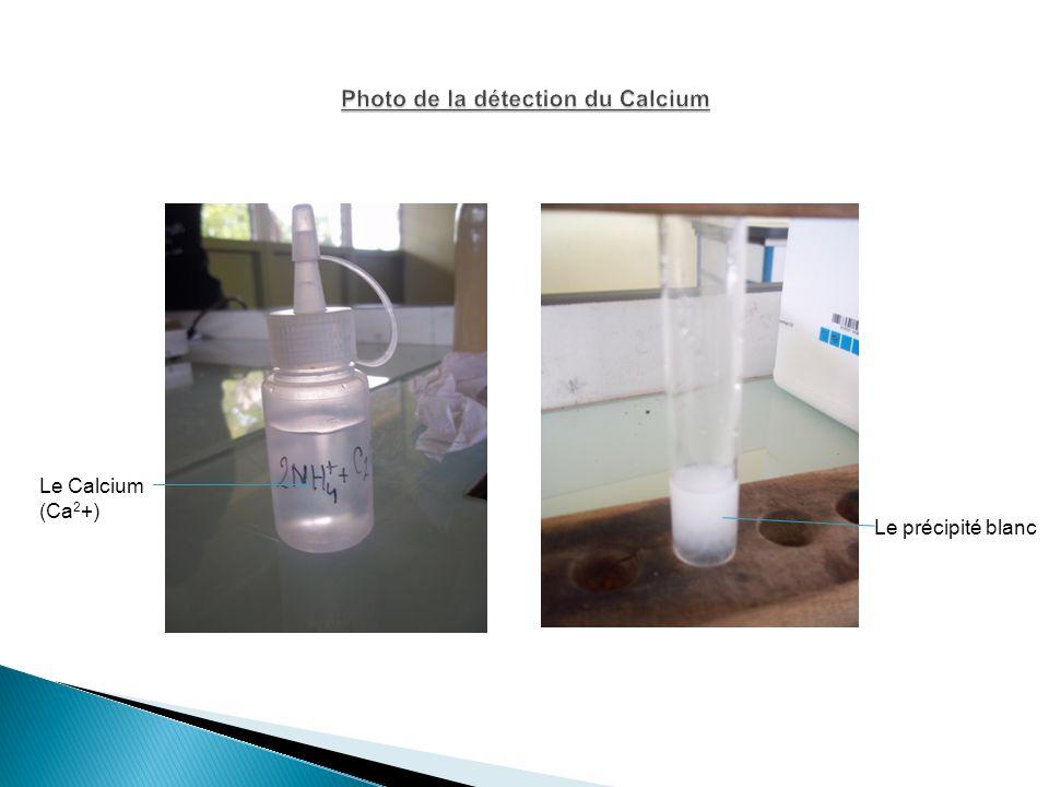 Le précipité blanc Le Calcium (Ca 2 +)