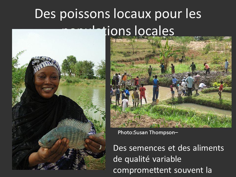 Des poissons locaux pour les populations locales Photo:Susan Thompson– Des semences et des aliments de qualité variable compromettent souvent la pérennité des interventions