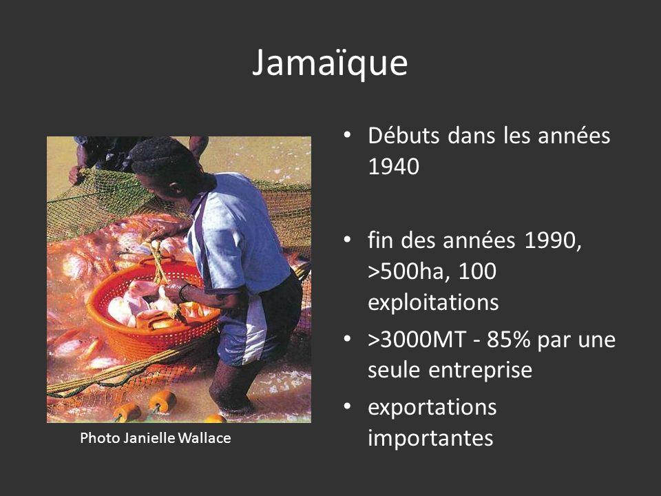 Jamaïque Débuts dans les années 1940 fin des années 1990, >500ha, 100 exploitations >3000MT - 85% par une seule entreprise exportations importantes Ph