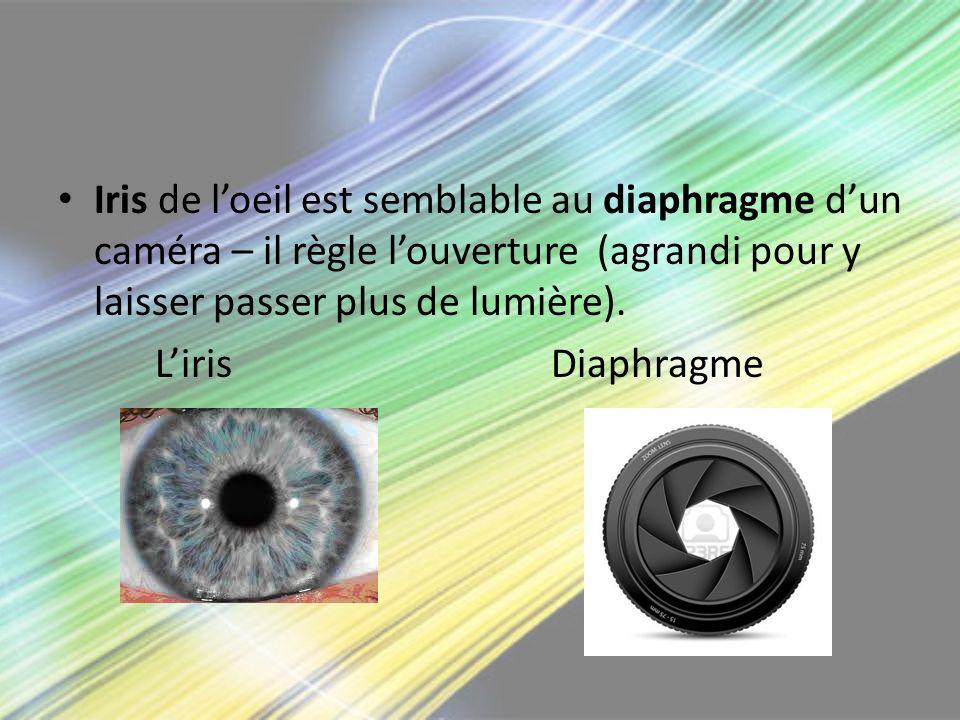 Iris de loeil est semblable au diaphragme dun caméra – il règle louverture (agrandi pour y laisser passer plus de lumière). Liris Diaphragme