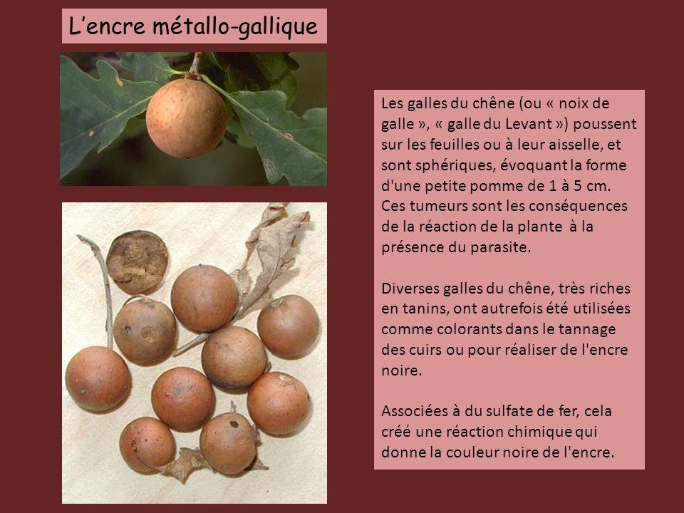 Les galles du chêne (ou « noix de galle », « galle du Levant ») poussent sur les feuilles ou à leur aisselle, et sont sphériques, évoquant la forme d'