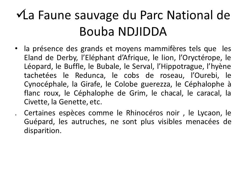 La Faune sauvage du Parc National de Bouba NDJIDDA la présence des grands et moyens mammifères tels que les Eland de Derby, lEléphant dAfrique, le lio