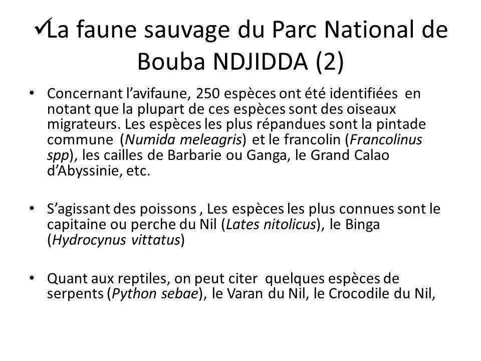 La faune sauvage du Parc National de Bouba NDJIDDA (2) Concernant lavifaune, 250 espèces ont été identifiées en notant que la plupart de ces espèces s