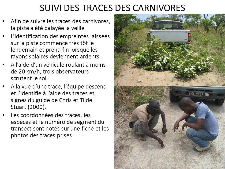 SUIVI DES TRACES DES CARNIVORES Afin de suivre les traces des carnivores, la piste a été balayée la veille Lidentification des empreintes laissées sur