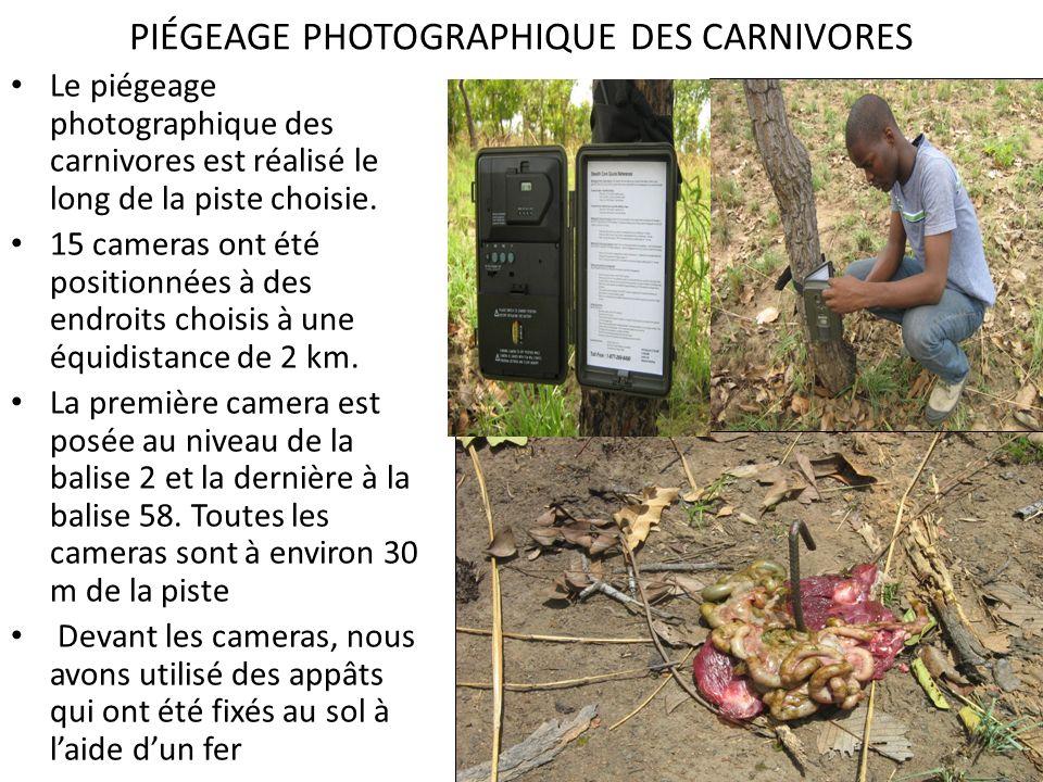 PIÉGEAGE PHOTOGRAPHIQUE DES CARNIVORES Le piégeage photographique des carnivores est réalisé le long de la piste choisie. 15 cameras ont été positionn