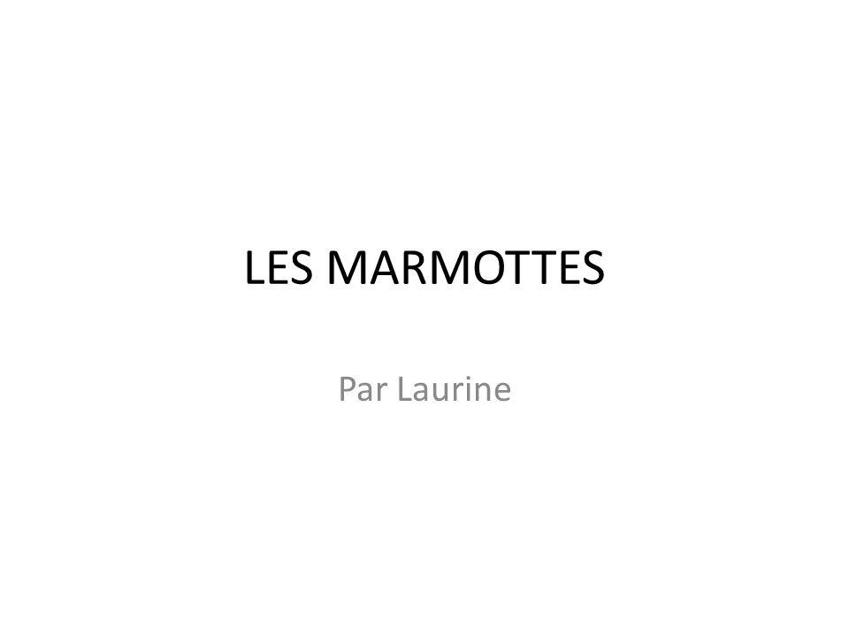 LES MARMOTTES Par Laurine