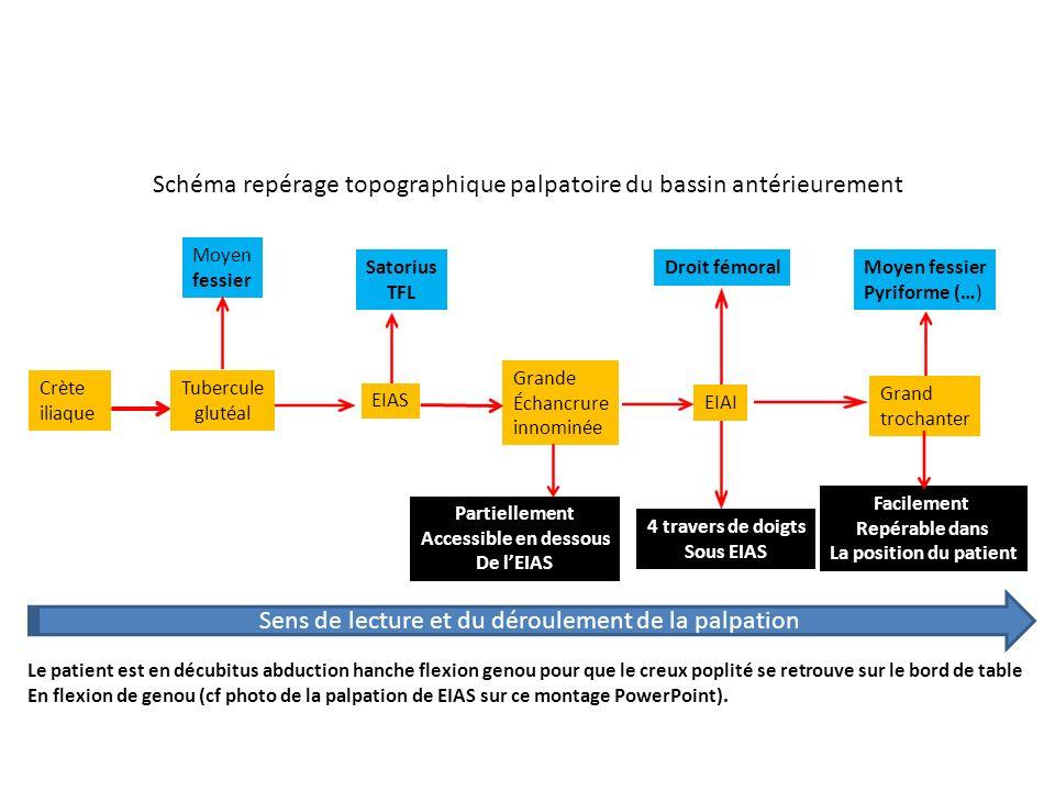 Schéma repérage topographique palpatoire du bassin antérieurement Sens de lecture et du déroulement de la palpation Crète iliaque Tubercule glutéal Mo