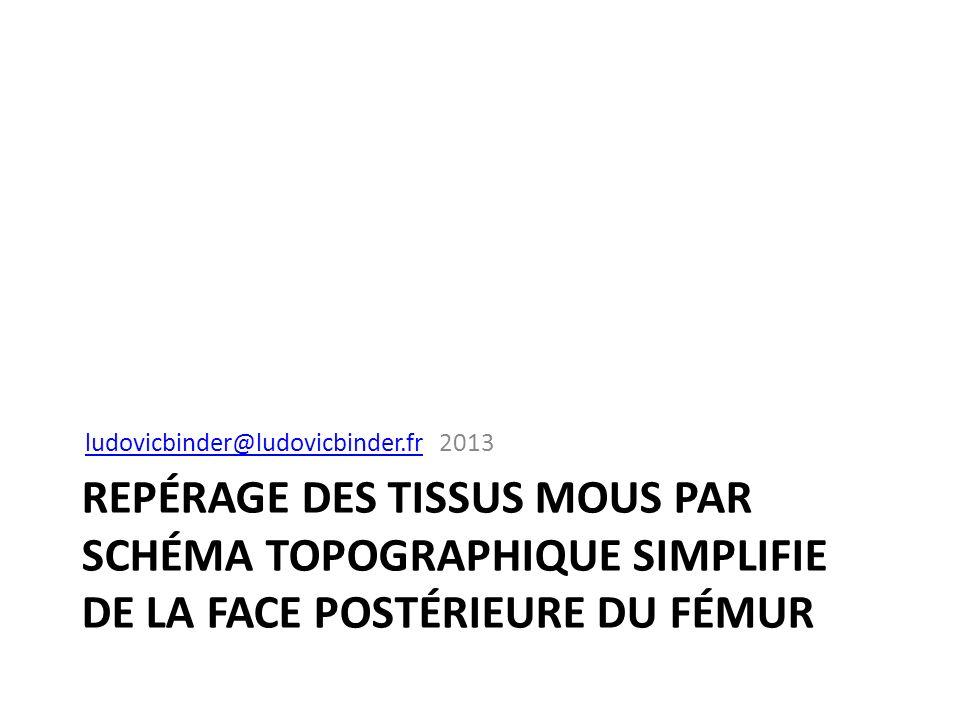 REPÉRAGE DES TISSUS MOUS PAR SCHÉMA TOPOGRAPHIQUE SIMPLIFIE DE LA FACE POSTÉRIEURE DU FÉMUR ludovicbinder@ludovicbinder.frludovicbinder@ludovicbinder.
