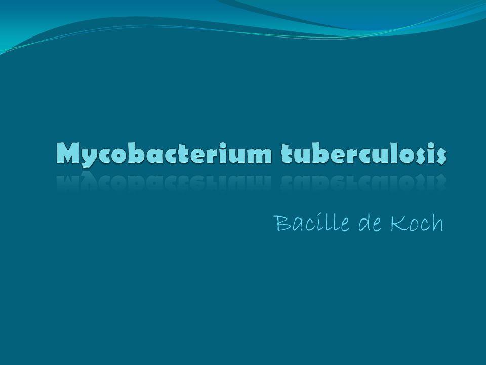 Bacille de Koch