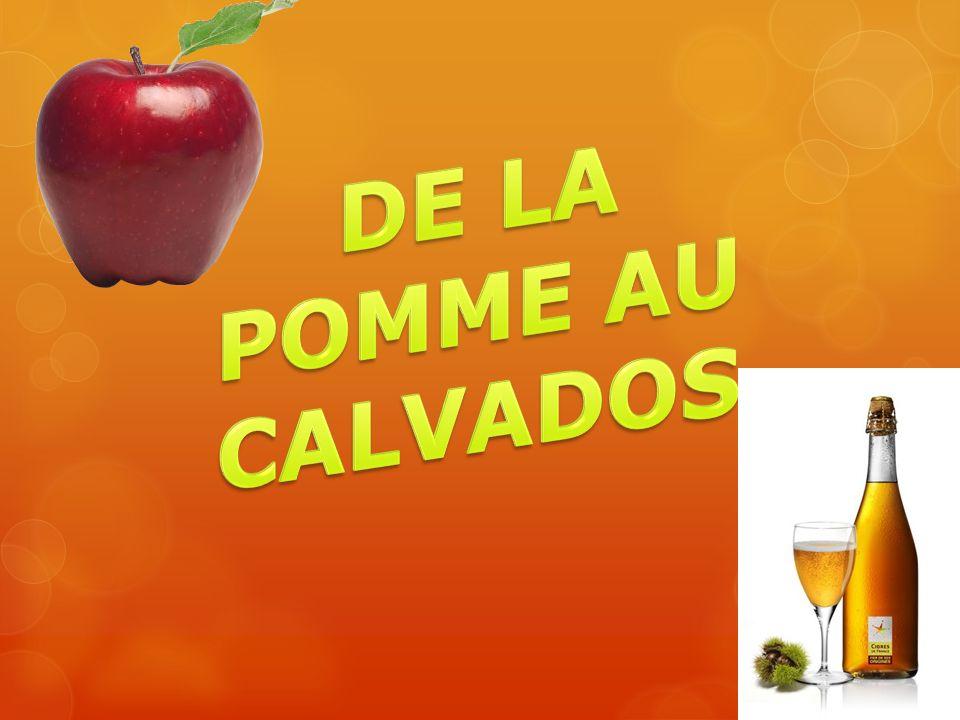 Pétiole séché Fruit Graine