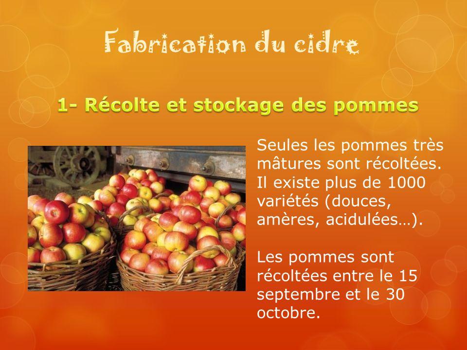Fabrication du cidre Seules les pommes très mâtures sont récoltées. Il existe plus de 1000 variétés (douces, amères, acidulées…). Les pommes sont réco
