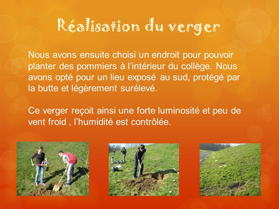 Réalisation du verger Nous avons ensuite choisi un endroit pour pouvoir planter des pommiers à lintérieur du collège. Nous avons opté pour un lieu exp