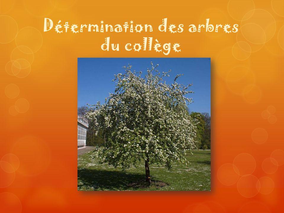 Détermination des arbres du collège