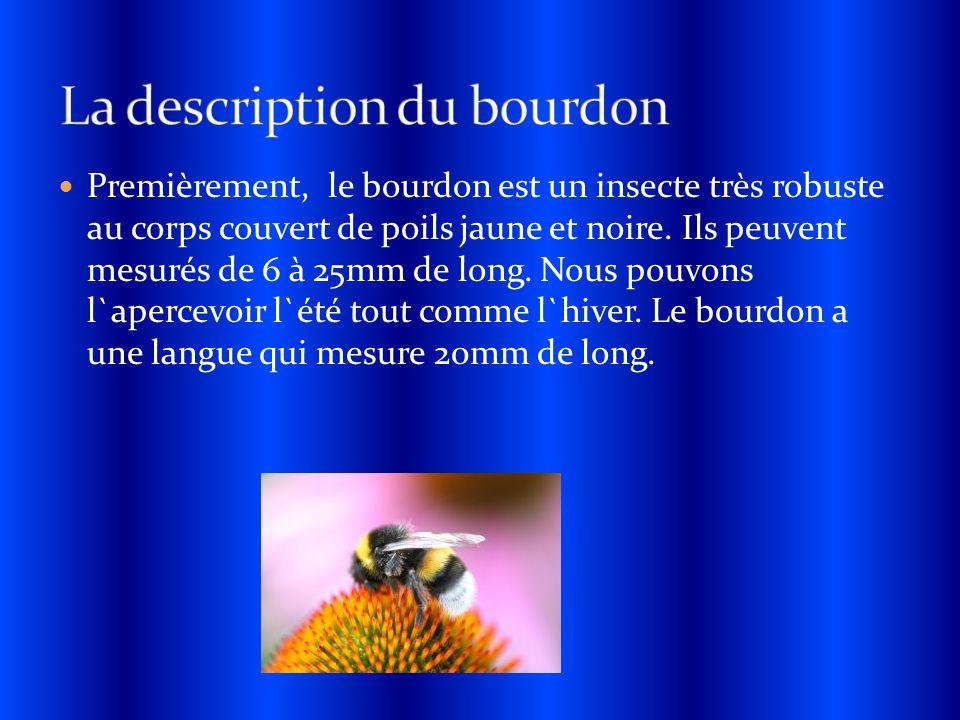 Premièrement, le bourdon est un insecte très robuste au corps couvert de poils jaune et noire. Ils peuvent mesurés de 6 à 25mm de long. Nous pouvons l