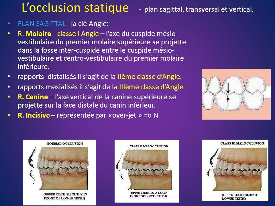 Locclusion statique - plan sagittal, transversal et vertical. PLAN SAGITTAL - la clé Angle: R. Molaire classe I Angle – laxe du cuspide mésio- vestibu