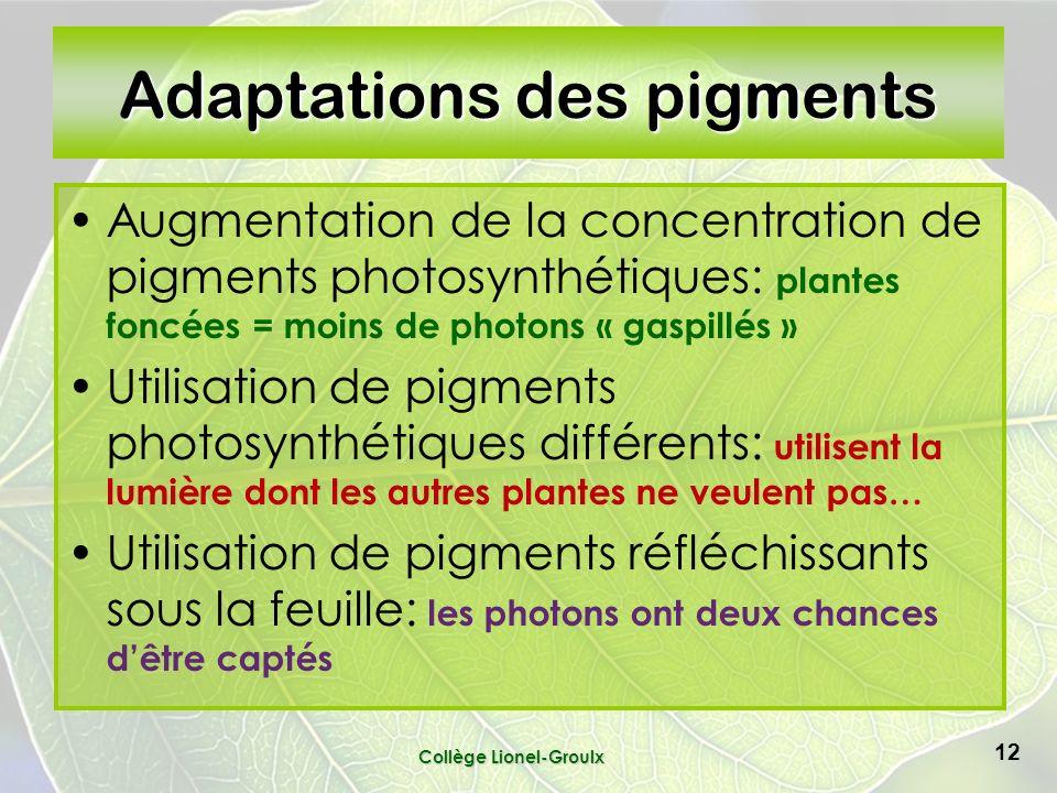 Collège Lionel-Groulx 12 Adaptations des pigments Augmentation de la concentration de pigments photosynthétiques: plantes foncées = moins de photons « gaspillés » Utilisation de pigments photosynthétiques différents: utilisent la lumière dont les autres plantes ne veulent pas… Utilisation de pigments réfléchissants sous la feuille: les photons ont deux chances dêtre captés