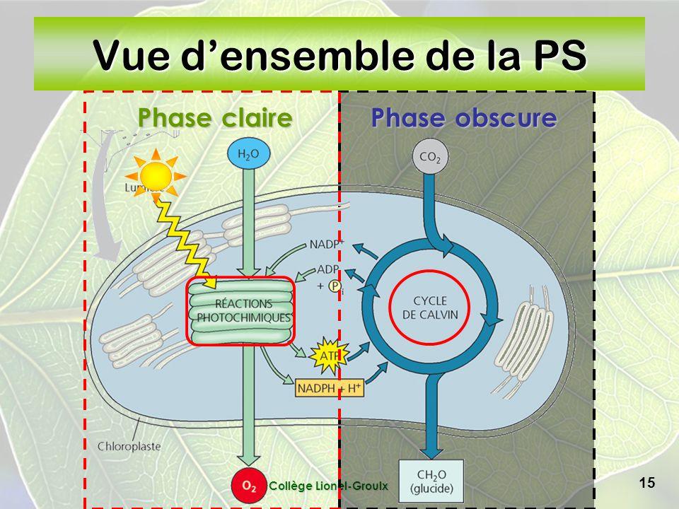 Collège Lionel-Groulx 15 Phase obscure Phase claire Vue densemble de la PS