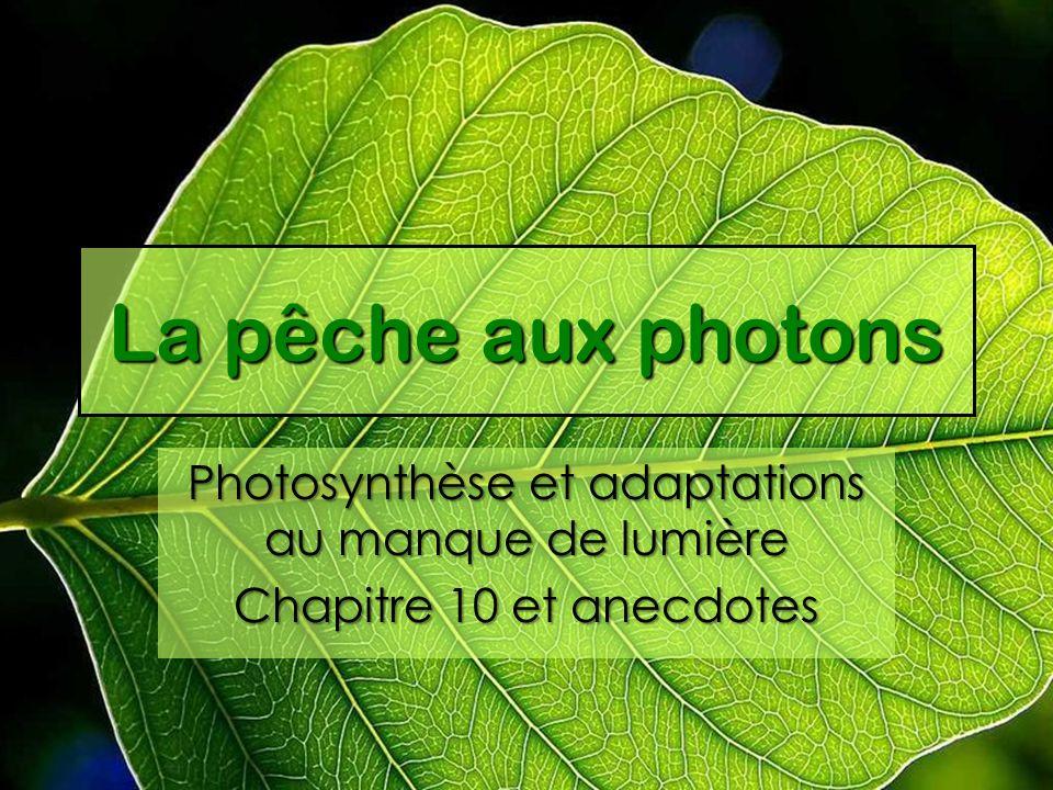 La pêche aux photons Photosynthèse et adaptations au manque de lumière Chapitre 10 et anecdotes