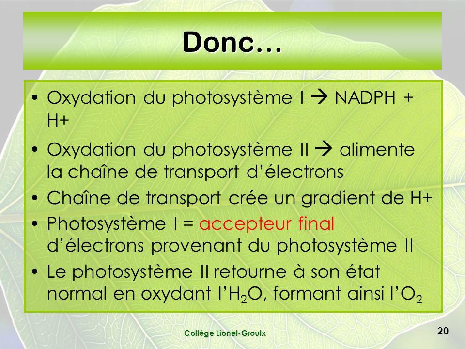 Collège Lionel-Groulx 20 Donc… Oxydation du photosystème I NADPH + H+ Oxydation du photosystème II alimente la chaîne de transport délectrons Chaîne de transport crée un gradient de H+ Photosystème I = accepteur final délectrons provenant du photosystème II Le photosystème II retourne à son état normal en oxydant lH 2 O, formant ainsi lO 2