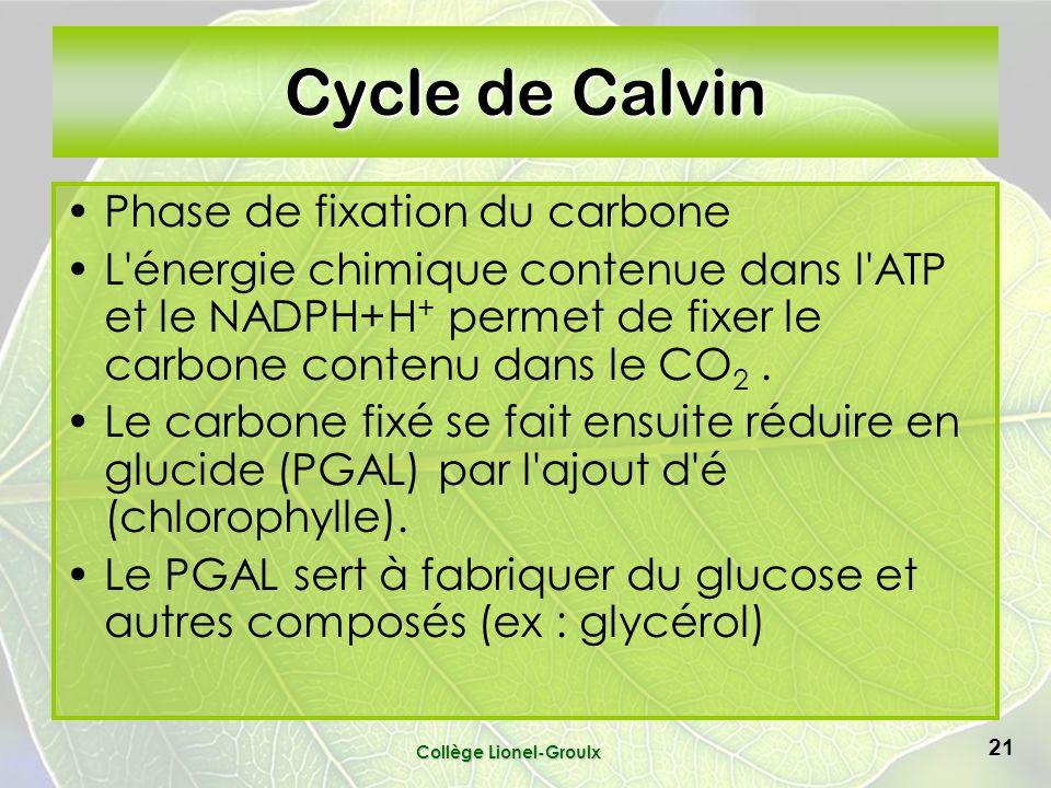 Collège Lionel-Groulx 21 Cycle de Calvin Phase de fixation du carbone L énergie chimique contenue dans l ATP et le NADPH+H + permet de fixer le carbone contenu dans le CO 2.