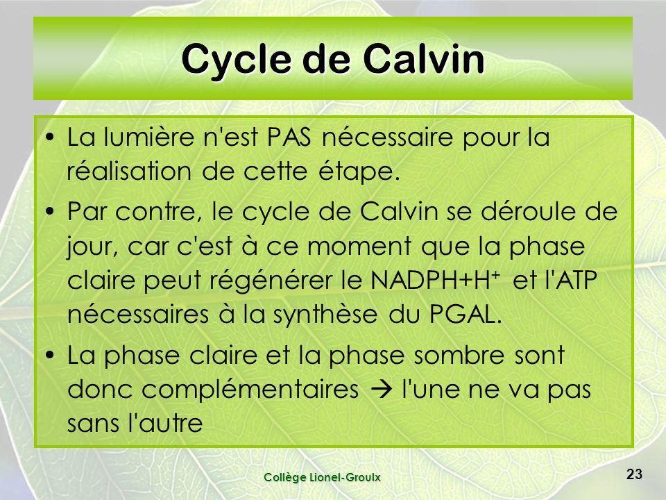Collège Lionel-Groulx 23 Cycle de Calvin La lumière n est PAS nécessaire pour la réalisation de cette étape.