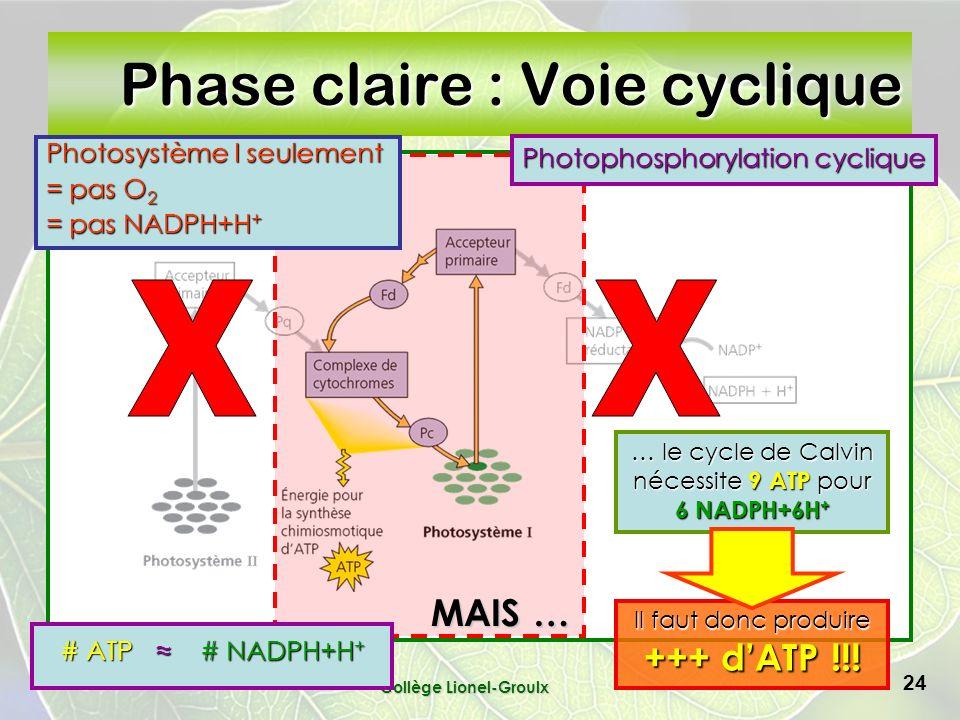 Collège Lionel-Groulx 24 Phase claire : Voie cyclique … le cycle de Calvin nécessite 9 ATP pour 6 NADPH+6H + Photosystème I seulement = pas O 2 = pas NADPH+H + Photophosphorylation cyclique # ATP # NADPH+H + Il faut donc produire +++ dATP !!.