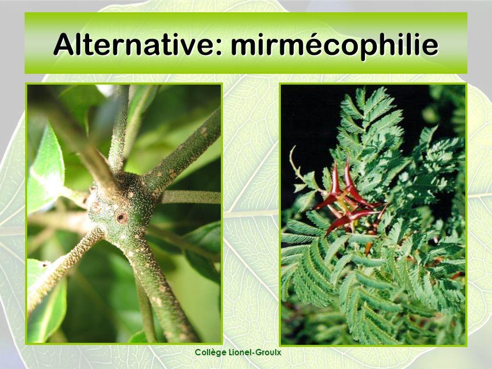 Alternative: mirmécophilie Collège Lionel-Groulx