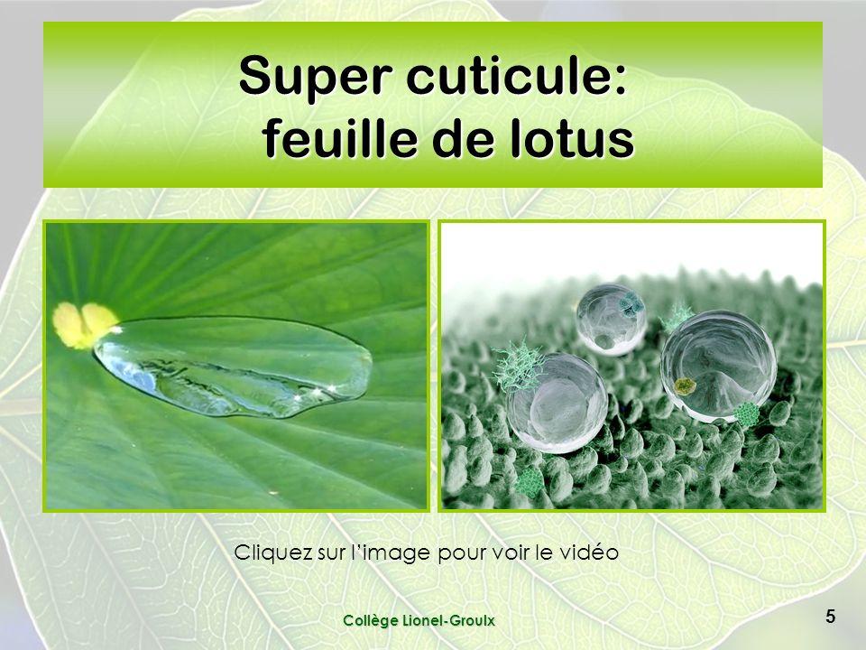Super cuticule: feuille de lotus Collège Lionel-Groulx 5 Cliquez sur limage pour voir le vidéo