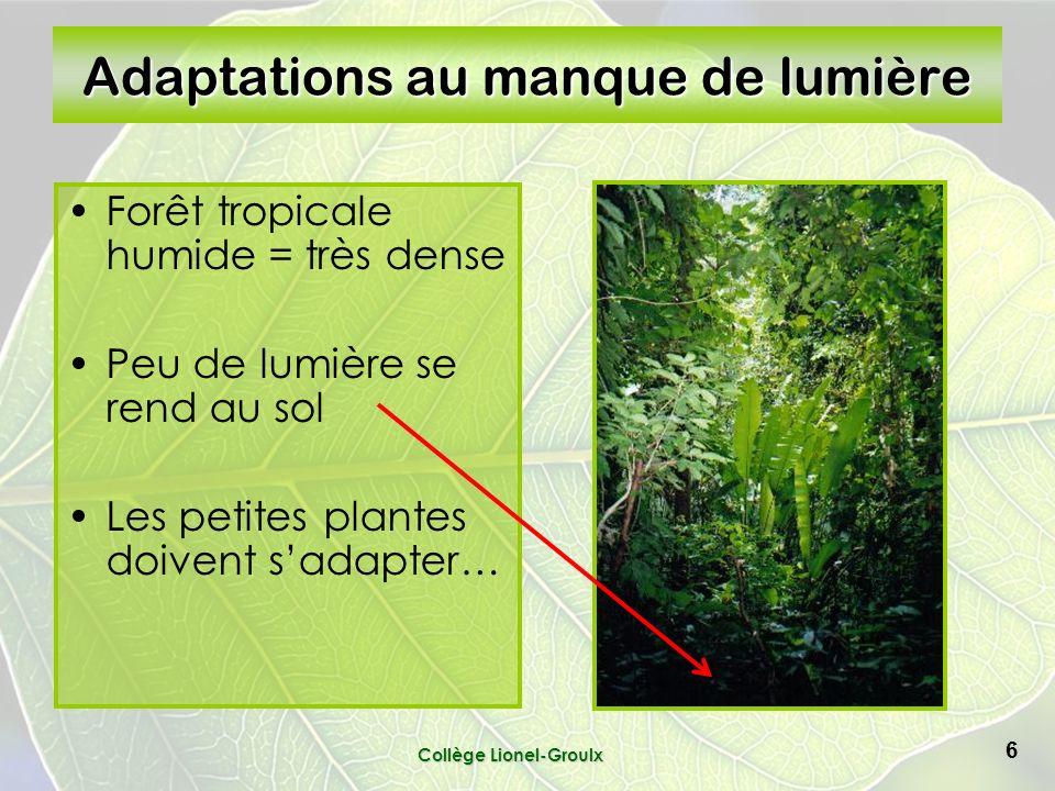 Collège Lionel-Groulx 6 Adaptations au manque de lumière Forêt tropicale humide = très dense Peu de lumière se rend au sol Les petites plantes doivent sadapter…