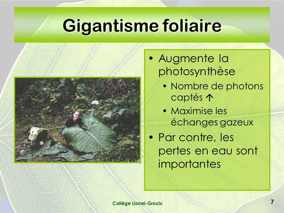 Gigantisme foliaire Augmente la photosynthèse Nombre de photons captés Maximise les échanges gazeux Par contre, les pertes en eau sont importantes Collège Lionel-Groulx 7