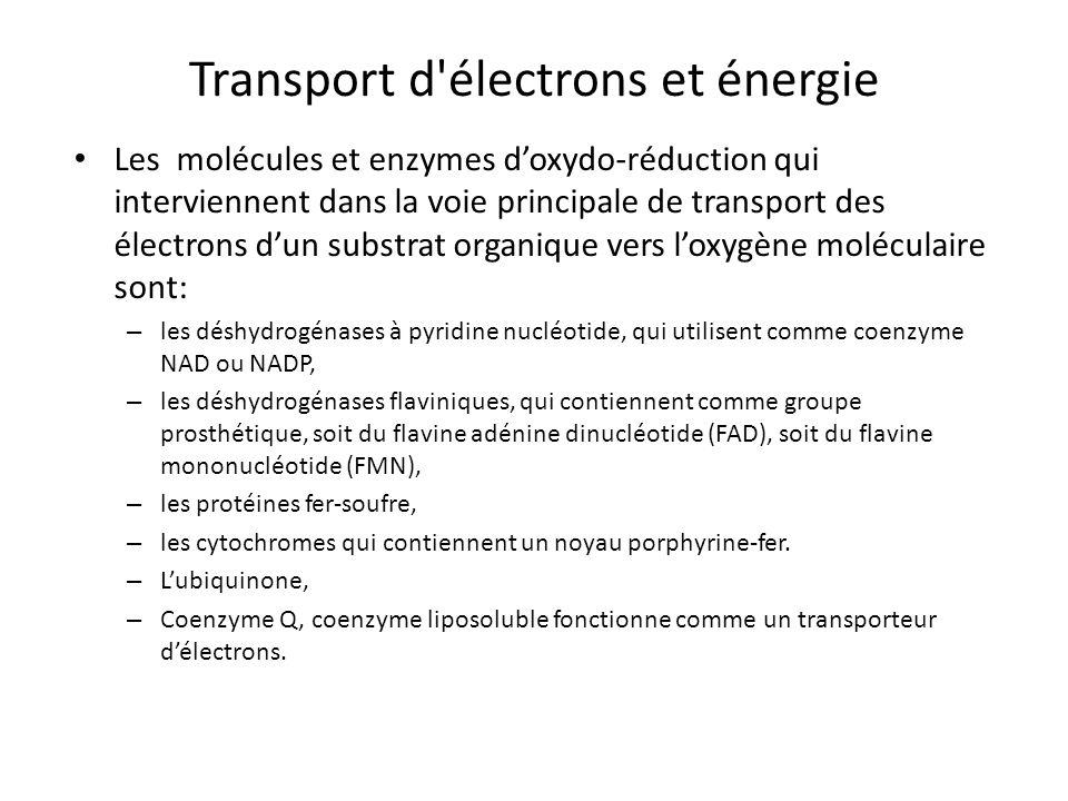 Transport d'électrons et énergie Les molécules et enzymes doxydo-réduction qui interviennent dans la voie principale de transport des électrons dun su