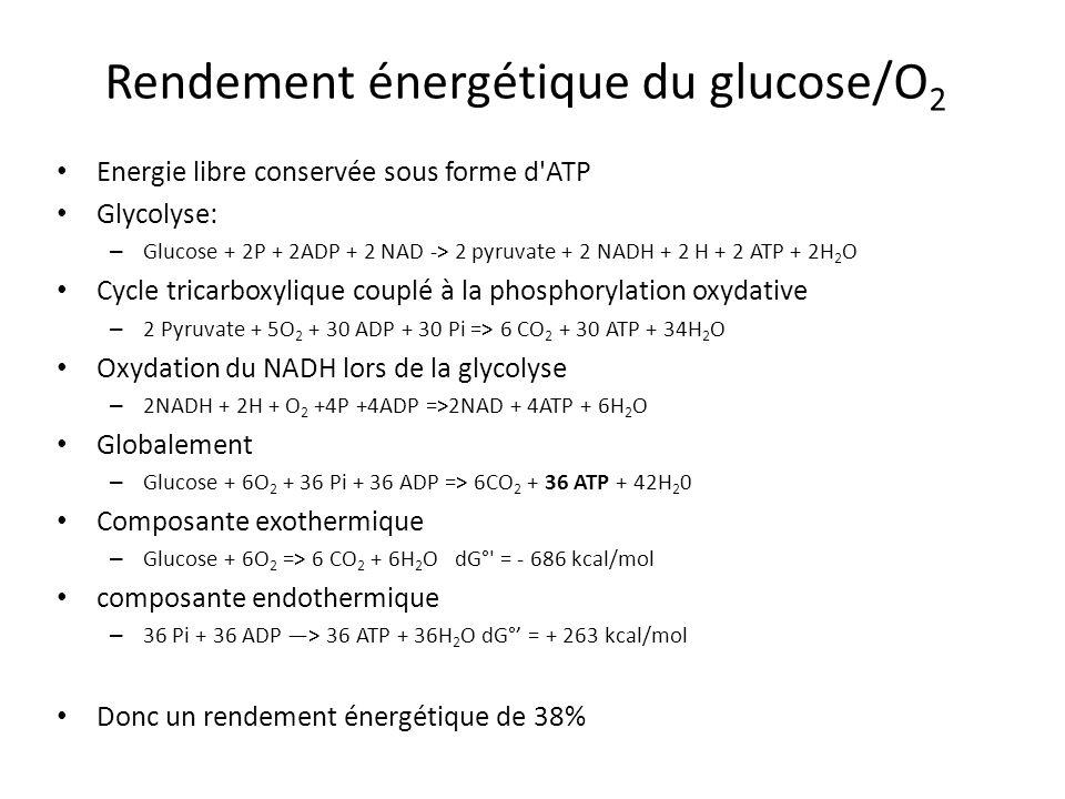 Rendement énergétique du glucose/O 2 Energie libre conservée sous forme d'ATP Glycolyse: – Glucose + 2P + 2ADP + 2 NAD -> 2 pyruvate + 2 NADH + 2 H +