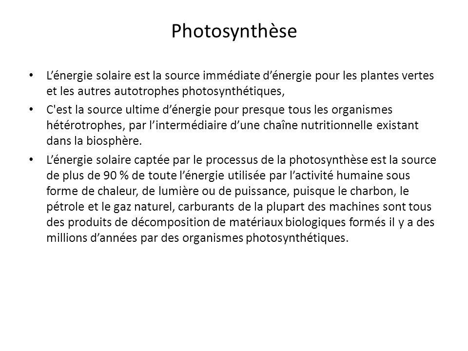 Photosynthèse Lénergie solaire est la source immédiate dénergie pour les plantes vertes et les autres autotrophes photosynthétiques, C'est la source u