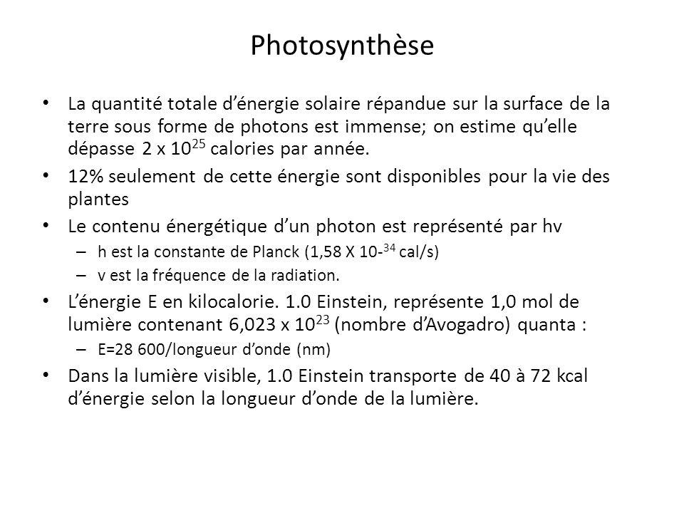 La quantité totale dénergie solaire répandue sur la surface de la terre sous forme de photons est immense; on estime quelle dépasse 2 x 10 25 calories