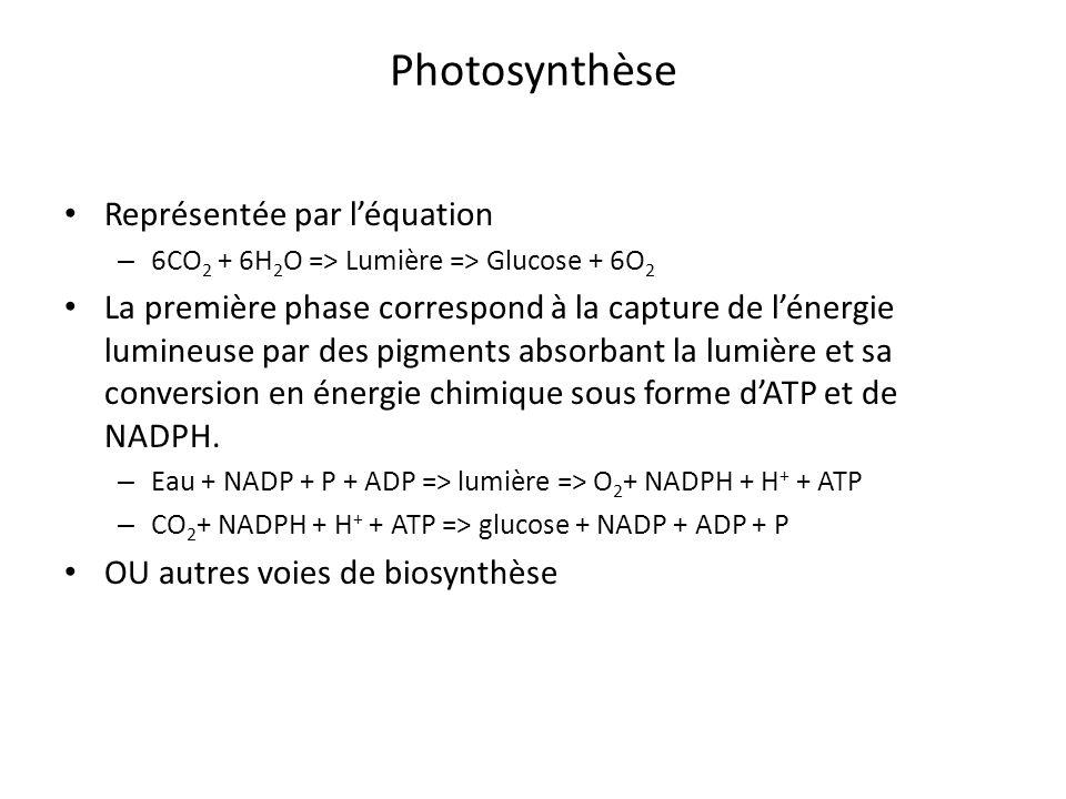 Représentée par léquation – 6CO 2 + 6H 2 O => Lumière => Glucose + 6O 2 La première phase correspond à la capture de lénergie lumineuse par des pigmen