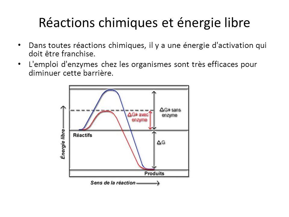 Réactions chimiques et énergie libre Dans toutes réactions chimiques, il y a une énergie d'activation qui doit être franchise. L'emploi d'enzymes chez