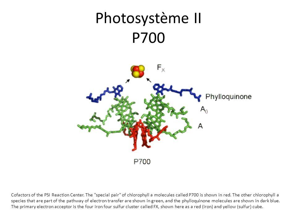 Photosystème II P700 Cofactors of the PSI Reaction Center. The