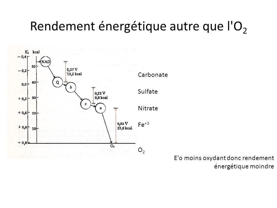 Rendement énergétique autre que l'O 2 Carbonate Sulfate Nitrate Fe +3 O 2 E'o moins oxydant donc rendement énergétique moindre