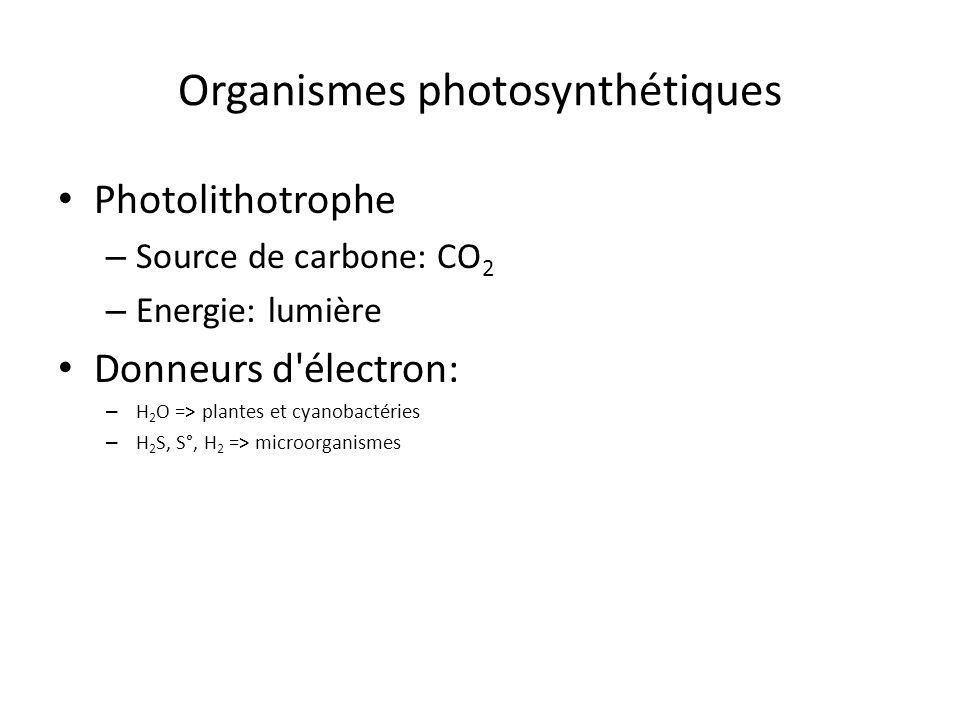 Organismes photosynthétiques Photolithotrophe – Source de carbone: CO 2 – Energie: lumière Donneurs d'électron: – H 2 O => plantes et cyanobactéries –