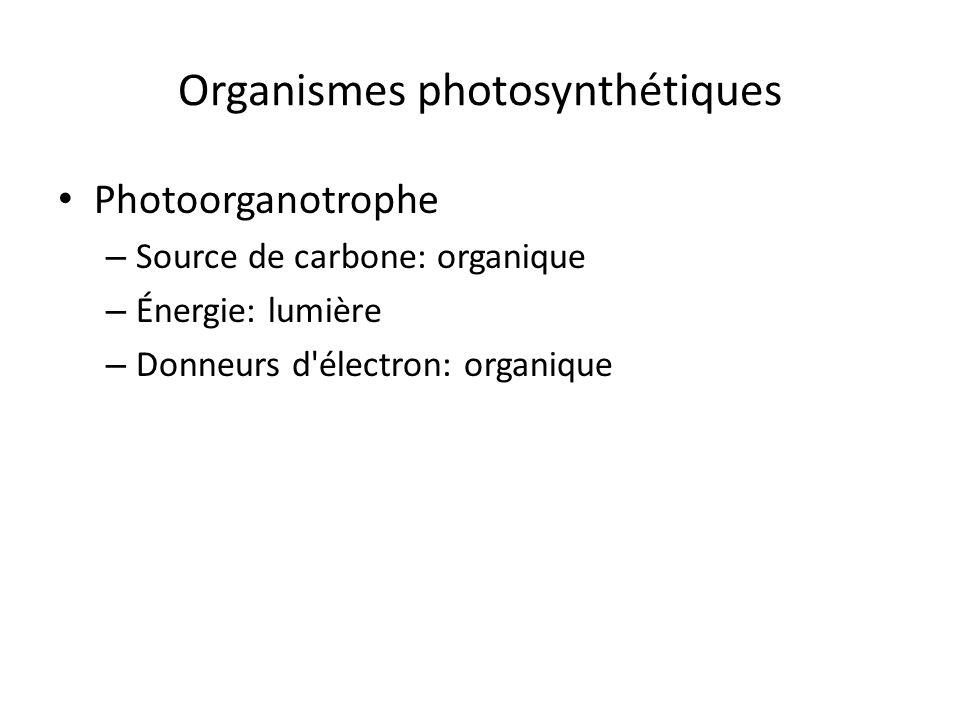 Organismes photosynthétiques Photoorganotrophe – Source de carbone: organique – Énergie: lumière – Donneurs d'électron: organique