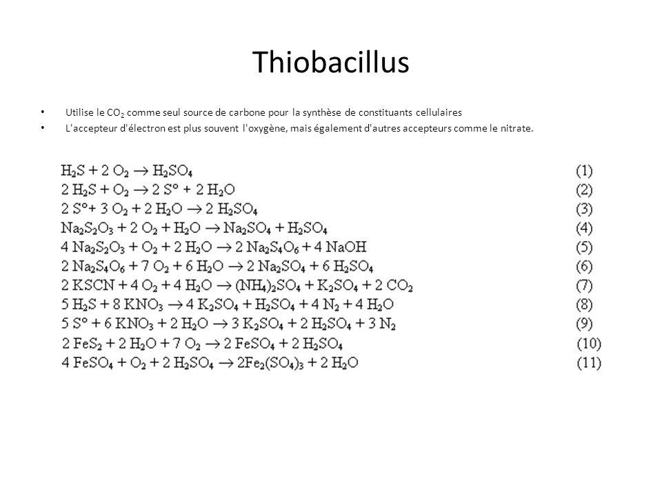Thiobacillus Utilise le CO 2 comme seul source de carbone pour la synthèse de constituants cellulaires L'accepteur d'électron est plus souvent l'oxygè